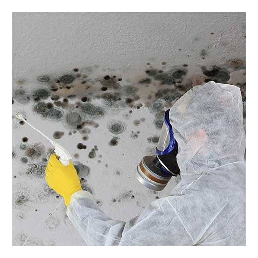 Mold In Apartment: What To Do With Apartment Mold